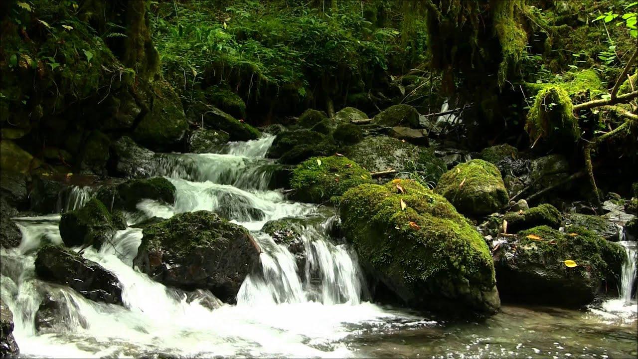 La petite amazonie hautes pyr n es 65 youtube for Piscine la petite amazonie