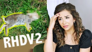 RABBITS ARE DYING EVERYWHERE! THE TRUTH ABOUT RHDV2