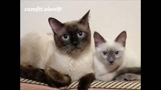 Появление на свет котят