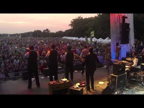 THE NIGHTOWLS at Blues On The Green