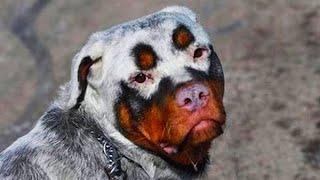 15 Unique Animals With Unbelievable Fur Markings