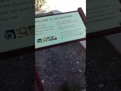 Vlog #5 In Big Bend At The Dinosaur Discovery Basin