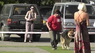 Викинг выставка собак в Волгограде 13.05.2012 эксп. Никитин