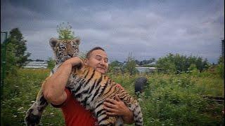 Встреча тигрицы и ее тигрят спустя 4 месяца