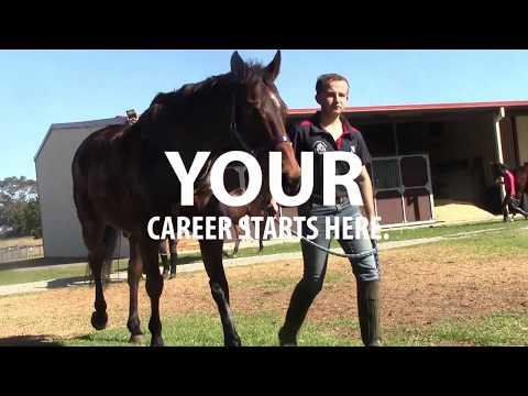 Start your Racing Career   Certificate II Stablehand