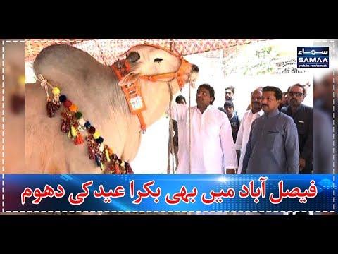Faisalabad Mein Bhi Bakra Eid Ki Dhoom | SAMAA TV |