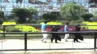 Animals Asia Foundation: Circus Cruelty in China