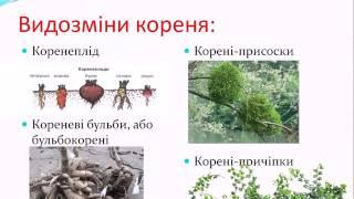 Підготовка до ЗНО з біології Урок №1