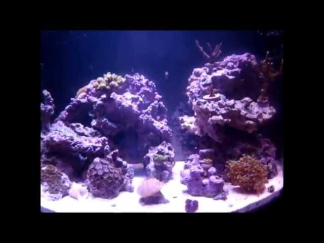 27 Gallon Frogfish Tank 10/21/2011