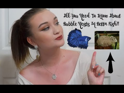 ALL YOU NEED TO KNOW ABOUT BUBBLE NESTS IN BETTA FISH! | ItsAnnaLouise