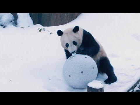 Thumbnail Panda Snow Day