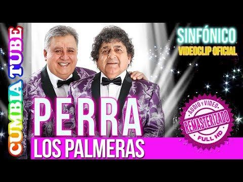 Los Palmeras - Perra | Sinfónico | Audio y Video Remasterizado Full HD | Cumbia Tube