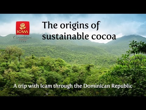The origins of sustainable cocoa