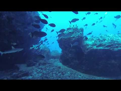 Diving with Kona Freedivers