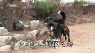 세상에 나쁜 개는 없다 - 대형견과 아기의 위험한 동거_#001