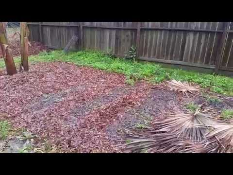 Organic gardening in Houston