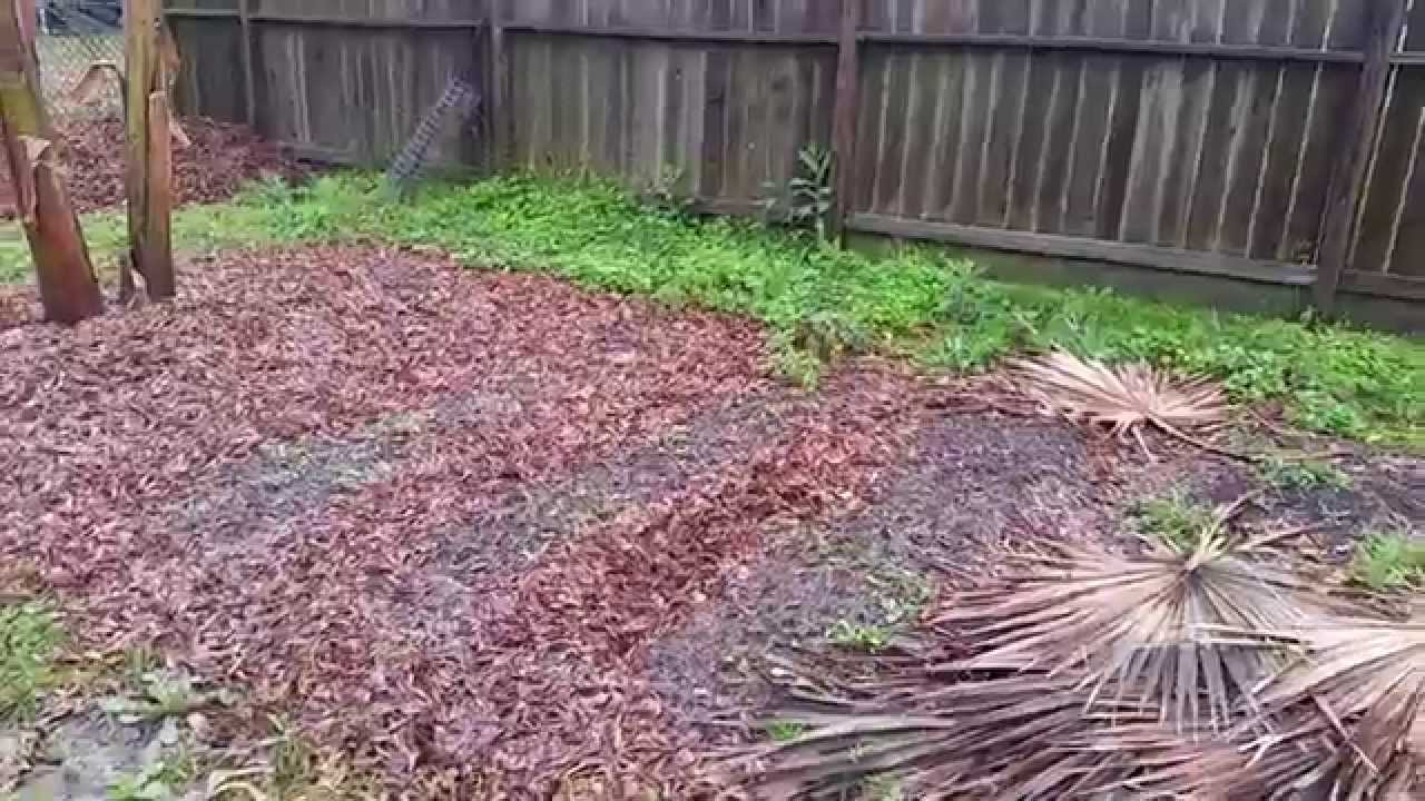 organic gardening in houston youtube