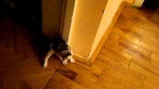 Кошка скачет по немножку
