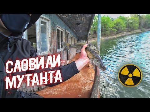 Словили мутанта в реке Припять. Можно ли есть чернобыльскую рыбу? Рыбалка в Зоне Отчуждения