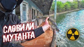 Словили мутанта в реке Припять Можно ли есть чернобыльскую рыбу Рыбалка в Зоне Отчуждения