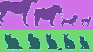Dogs vs Cats: The Diversity Paradox
