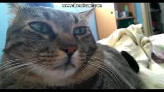 Супер приколы с котами. Топ ржака. Смотреть Всем.Приколы коты. Funny cats
