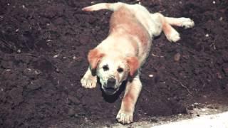У людей одинокие души, у собак одинокая смерть.