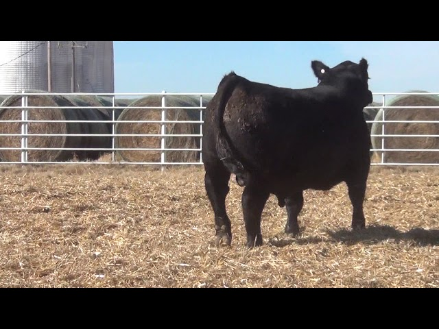 Express Ranches Lot 359