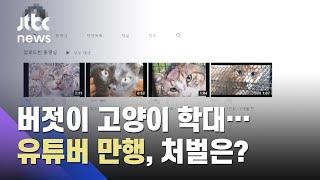 """고양이 학대 영상 버젓이 게시…유튜버 """"만행""""에 누리꾼 분노 / JTBC 사건반장"""