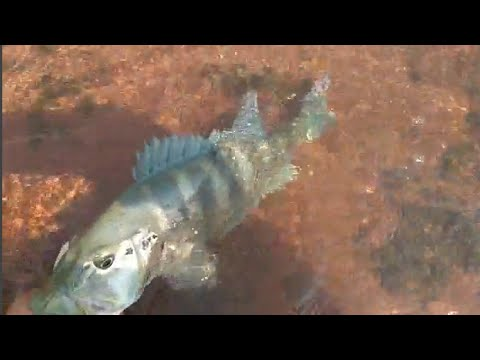 Pescaria Na Balsa Ipiaçu/Santa Vitória, Muito Peixe...