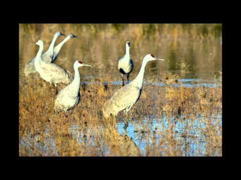 Sandhill Cranes have returned to the Klamath Basin