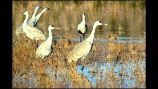 Sandhill Cranes have returned to the Klamath Basin