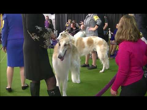 Borzoi Westminster dog show 2019
