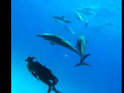 swimming-with-dophins,-dolphin-slide-show-#1