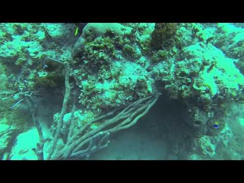 Spearfishing in Exuma-Rake N Scrape-Bahama 41