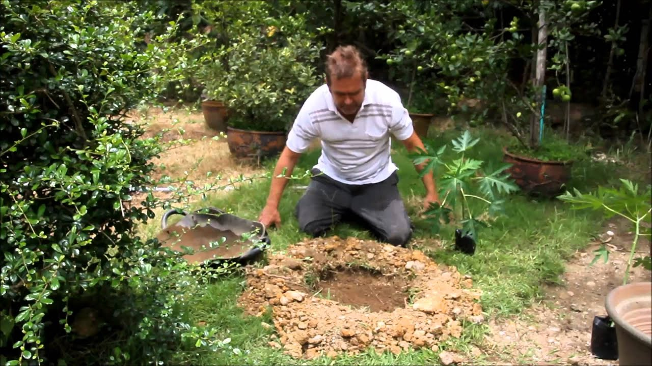 How to plant a papaya plant in clay soil youtube for What is soil made out of
