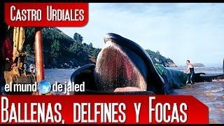 CASTRO URDIALES | La Gran Ballena de Sonabia - Castro Urdiales - Cantabria- España