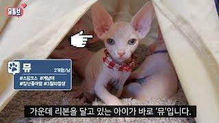스핑크스 고양이 뮤 첫 입양날  VLOG |뮤튜브 ME…