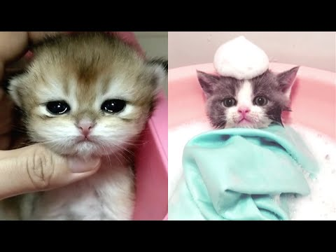 Baby Cats | Cute & Funny Cats Compilation 2020 | TRY NOT AWW