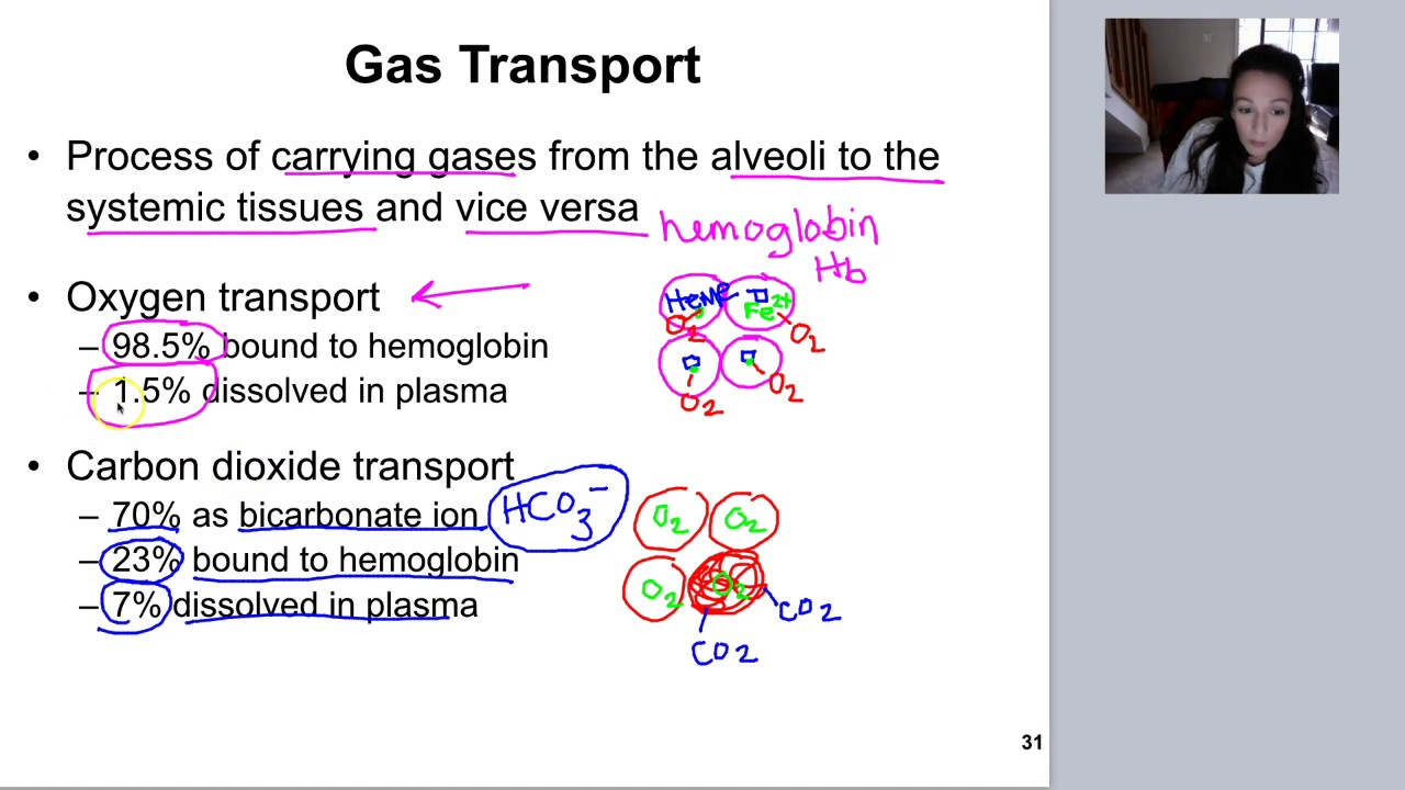 blood gas transport essay Previous ib exam essay questions: unit 12 use these model essay questions and responses to prepare for essay questions on your in-class tests, as well as the ib.