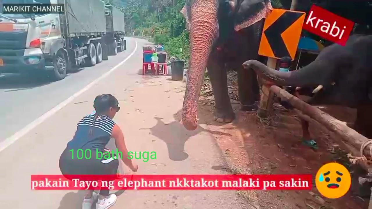 FADING ELEPHANTS SUGAR CANE AT KRABI