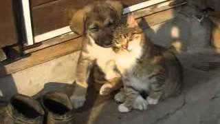Щенок и котёнок!! Мило и прикольно!!!