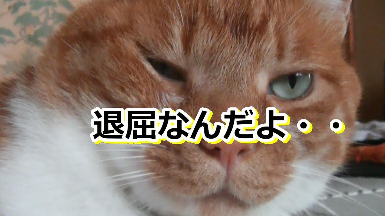 悠々自適な猫さん【侵入した野良仔猫】~家猫修行中~