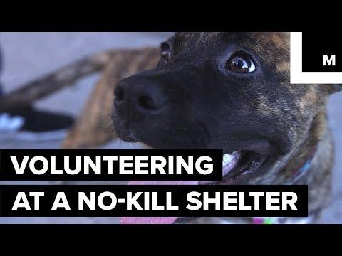 Volunteering At A No-Kill Animal Shelter