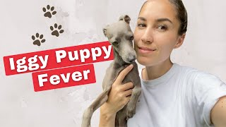 DON'T WATCH if you don't want Italian Greyhound puppy fever