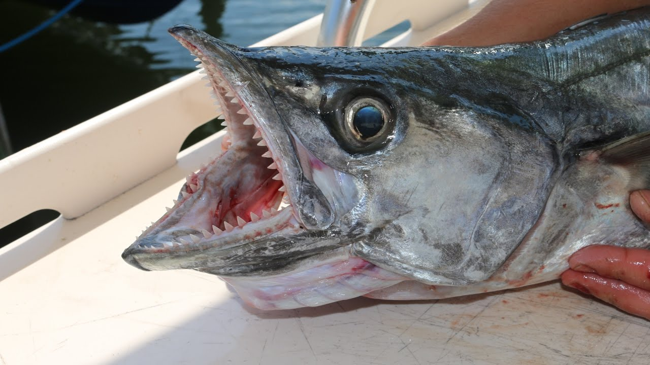 The Forgotten King- Florida Kingfish!!!! Catch, Clean and Cook!!!!