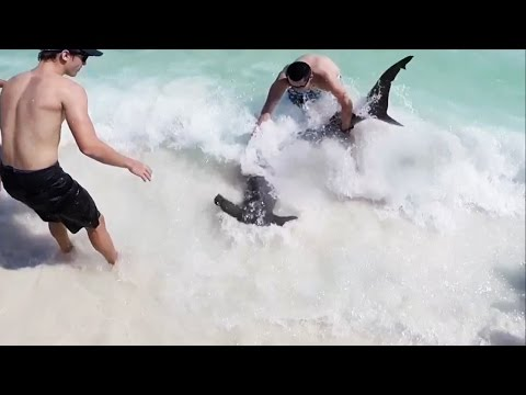 10 Ft. Hammerhead Shark Pulled to Beach by Brave Teen