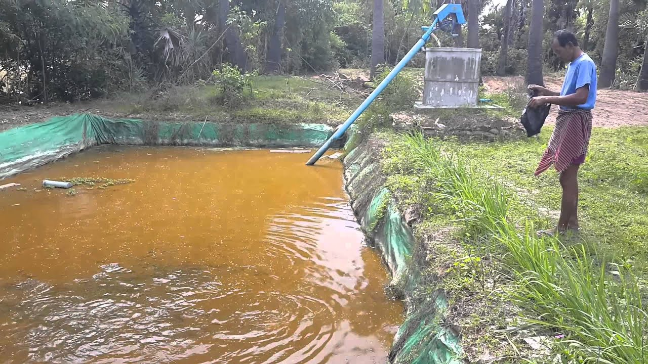 Fish raising in tarpaulin lining pond youtube for Making a fish pond