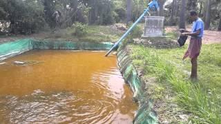 Fish raising in tarpaulin lining pond