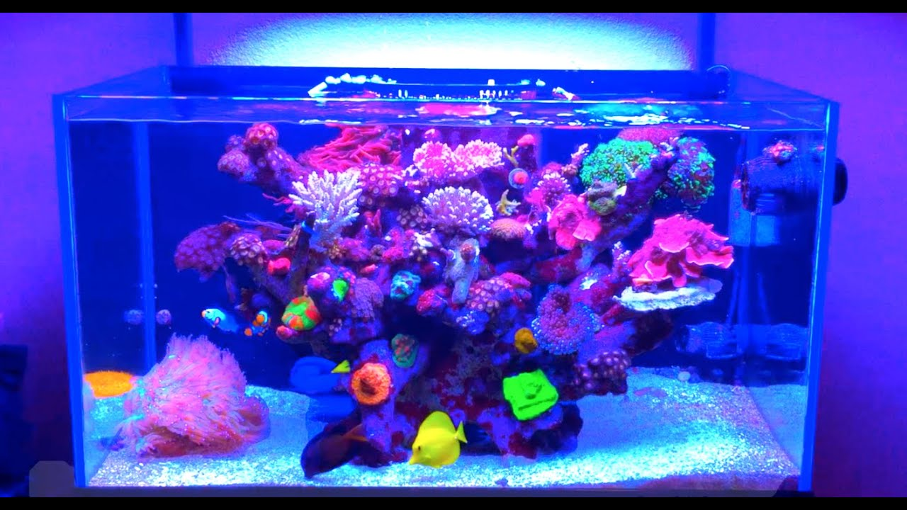 60 gallon rimless tonga tank reef aquarium youtube. Black Bedroom Furniture Sets. Home Design Ideas